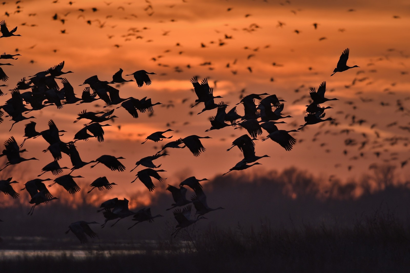 animals_nature_birds-135420